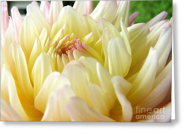 Greeting Card featuring the photograph Yellow Dahlia by Margie Amberge