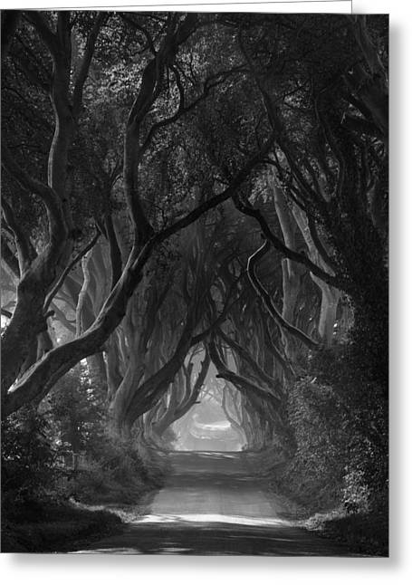 The Dark Hedges Greeting Card by Andy Gibson