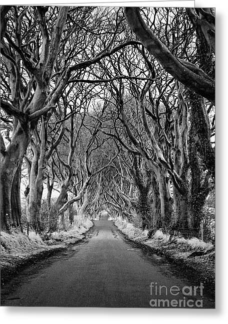 The Dark Hedges Beech Tree Avenue In Winter County Antrim Northern Ireland Greeting Card by Joe Fox