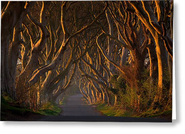 The Dark Hedges In The Morning Sunshine Greeting Card by Piotr Galus