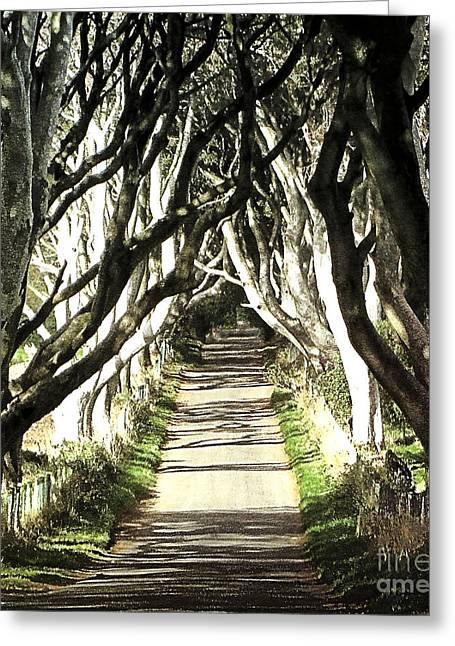 The Dark Hedges Greeting Card by Larry Ferreira