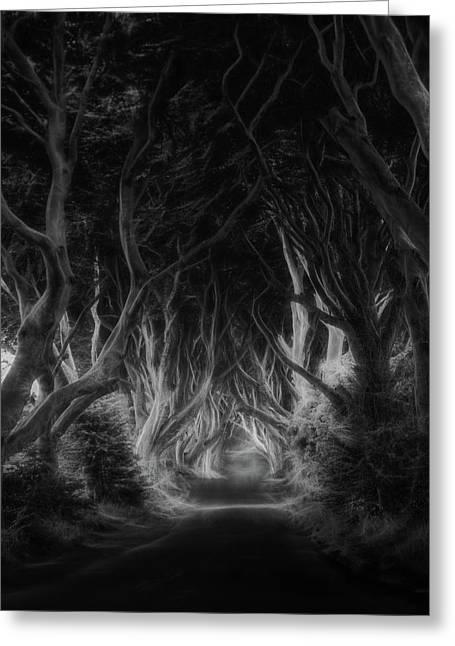 The Dark Hedges Greeting Card by Saskia Dingemans