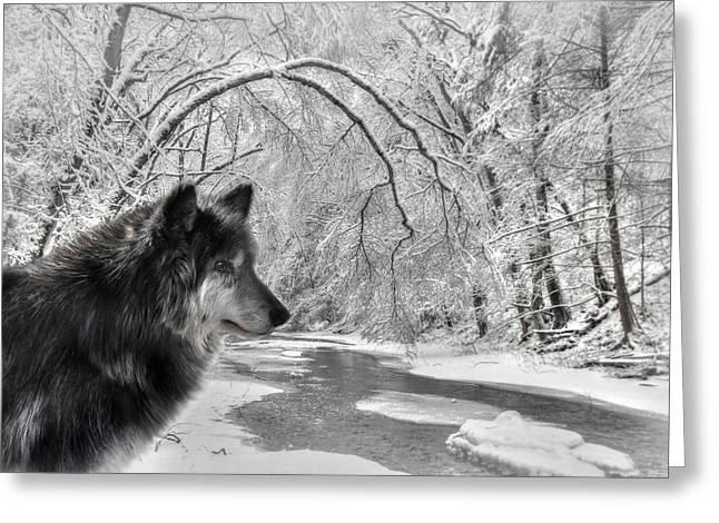 The Dark Wolf Greeting Card by Lori Deiter