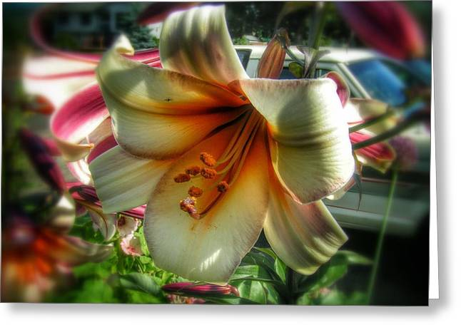 The Day Lily Greeting Card by Melissa Coffield
