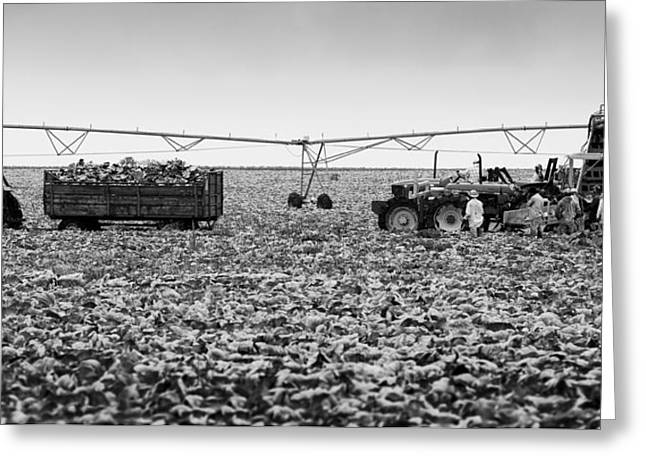 The Day On The Farm Greeting Card by Ricky L Jones