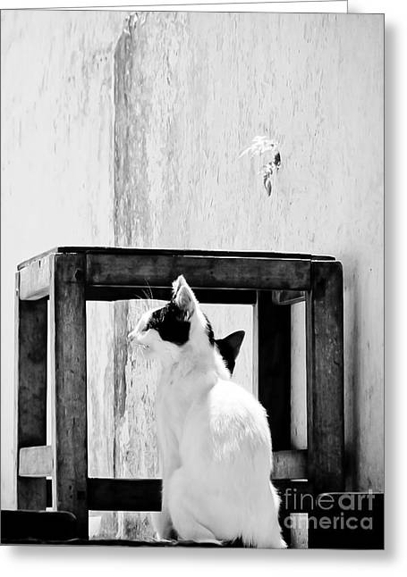 The Daydreamer Cat Greeting Card by Trish Oliveira