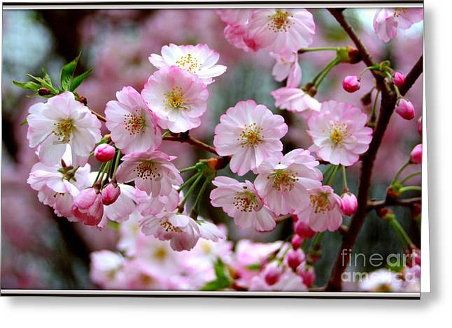 The Delicate Cherry Blossoms Greeting Card by Patti Whitten
