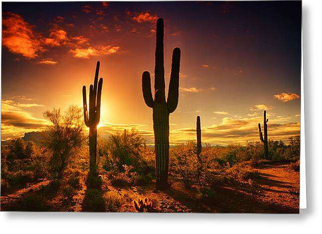 The Desert Awakens  Greeting Card by Saija  Lehtonen