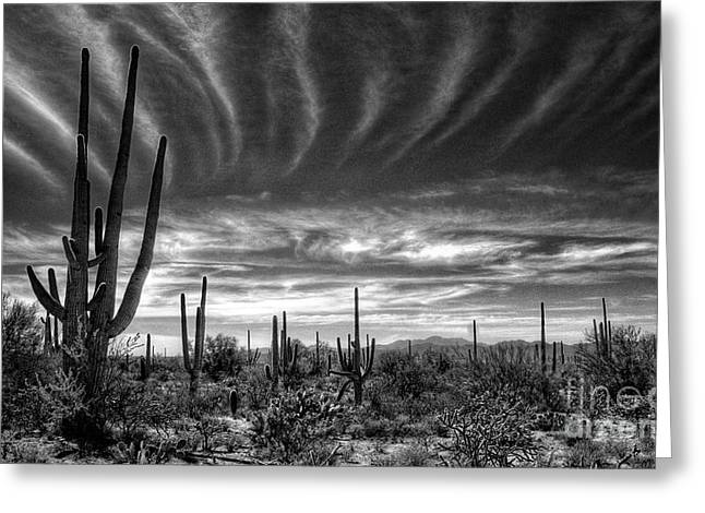 The Desert In Black And White Greeting Card by Saija  Lehtonen