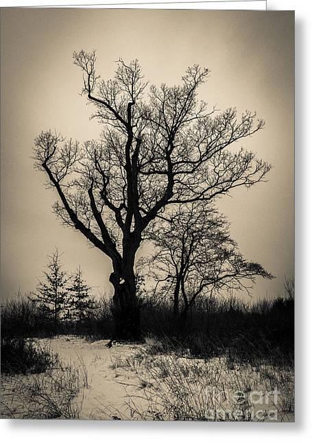 The Devil's Tree Greeting Card by Jeffrey Miklush