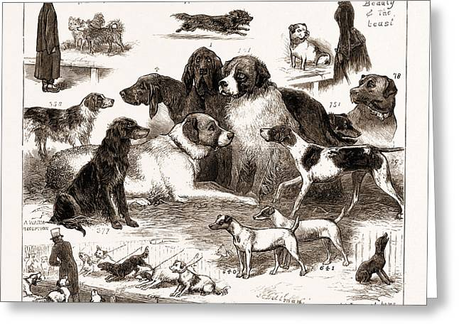 The Dog Show At The Crystal Palace, London Greeting Card by Litz Collection