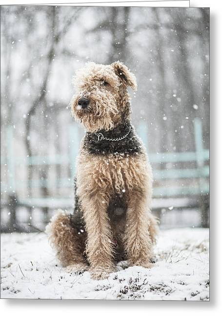 The Dog Under The Snowfall Greeting Card