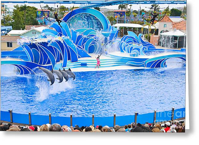 The Dolphin Show Blue Horizons At Seaworld. Greeting Card by Jamie Pham