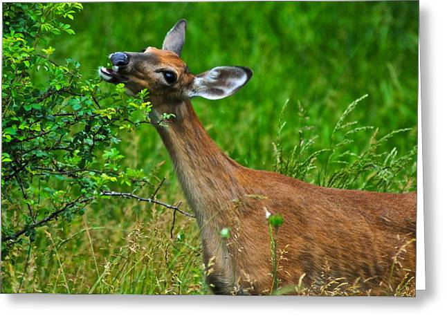 The Dreaded Deer Giraffe Greeting Card by Frozen in Time Fine Art Photography