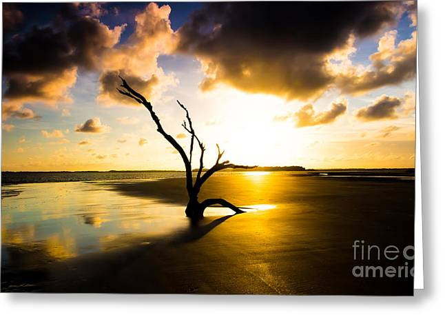 The Driftwood Tree Folly Beach Greeting Card