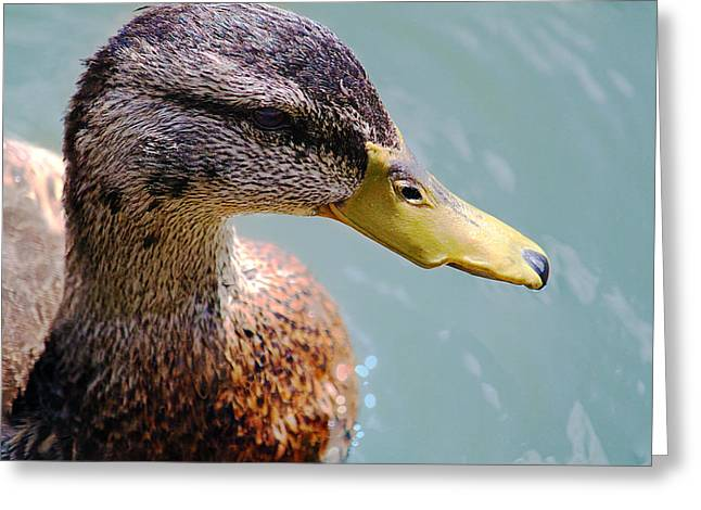Greeting Card featuring the photograph The Duck by Milena Ilieva