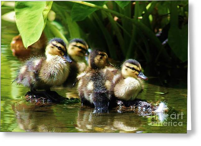 The Duckling Gang Greeting Card