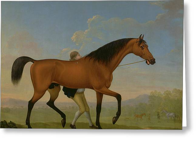 The Duke Of Ancasters Bay Stallion, Blank Greeting Card by Litz Collection