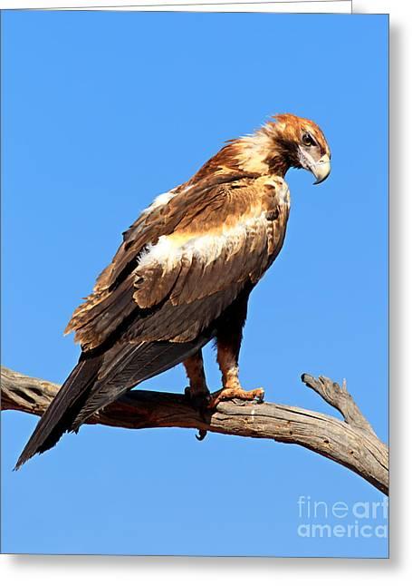 The Eagle Eye Greeting Card by Bill  Robinson