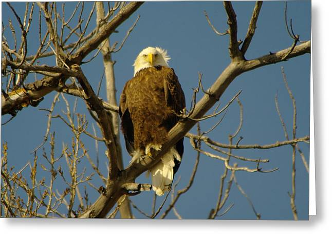 The Eagle Looks Down Greeting Card by Jeff Swan