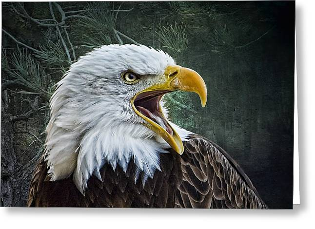 Greeting Card featuring the photograph The Eagle's Cry by Brian Tarr