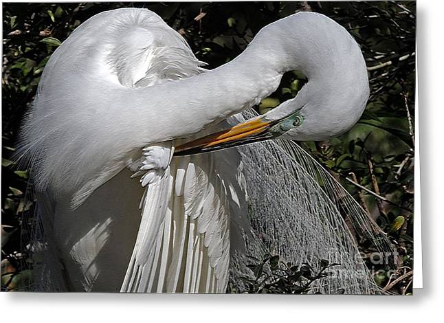 The Elegant Egret Greeting Card