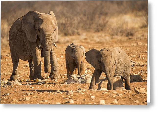 The Elephants Itching Rock Greeting Card by Paul W Sharpe Aka Wizard of Wonders