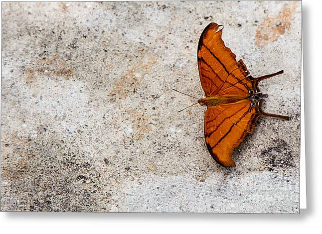 The Elusive Butterfly  Greeting Card by Rene Triay Photography