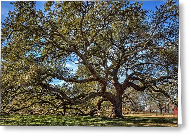 The Emancipation Oak Tree At Hu Greeting Card
