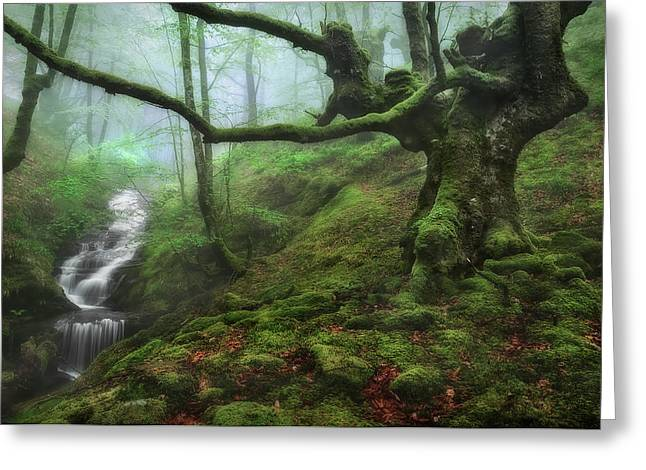 The Enchanted Forest Greeting Card