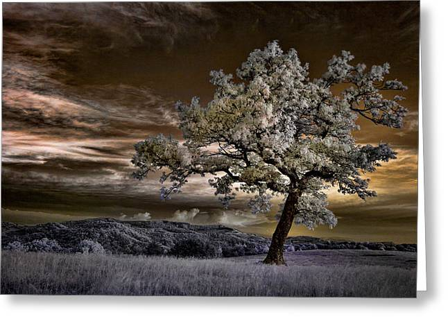 The Enchanted Tree - Blue Ridge Parkway Greeting Card by Dan Carmichael