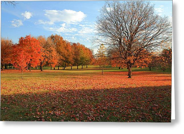 Greeting Card featuring the photograph The End Of Autumn In Francis Park by Scott Rackers