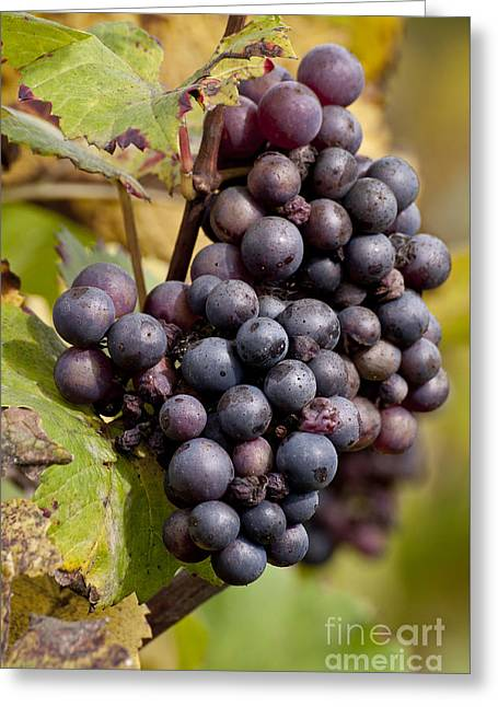 The End Of Grape Harvest Greeting Card by Simona Ghidini