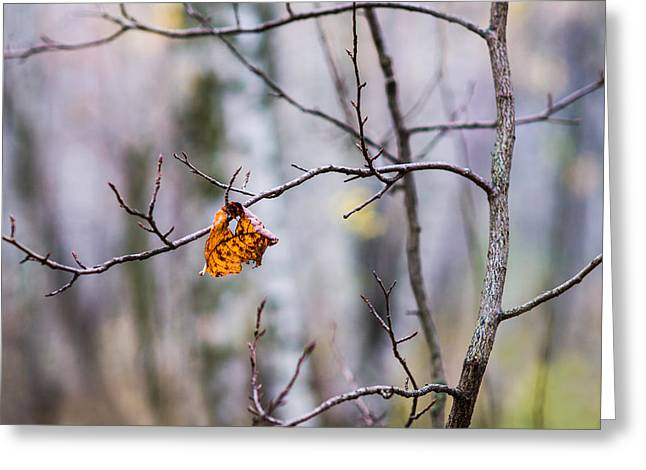 The Essence Of Autumn - Featured 3 Greeting Card by Alexander Senin