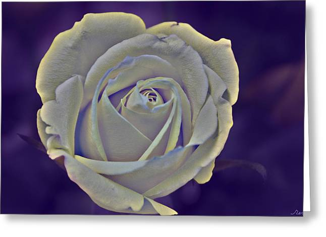 The Ethereal Rose  Greeting Card