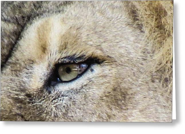 The Eye Of A Lion Greeting Card by Michael Putthoff