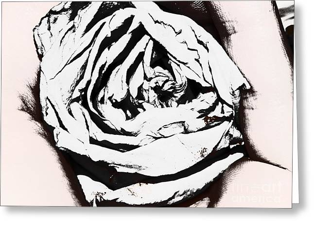 The Eye Of A Rose Greeting Card by Thommy McCorkle