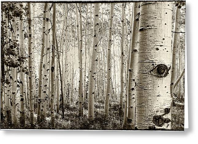 The Eye Of The Aspen Greeting Card by John McArthur