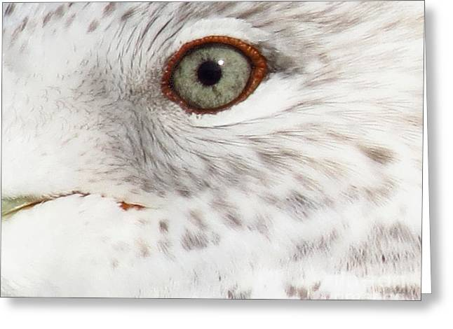 The Eye Of The Gull Greeting Card