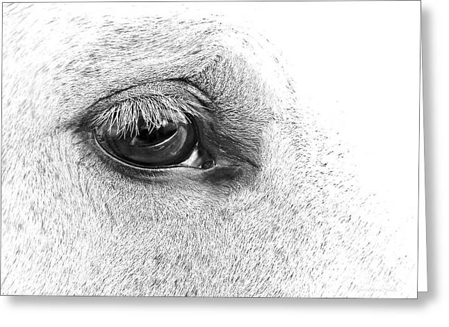 The Eye Of The Horse Black And White Greeting Card