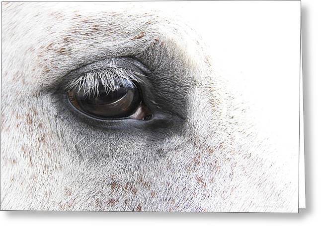 The Eye Of The Horse  Greeting Card by Jennie Marie Schell