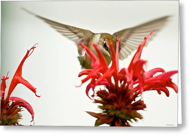 The Eye Of The Hummingbird Greeting Card
