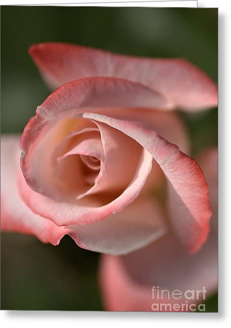 The Eye Of The Rose Greeting Card by Joy Watson