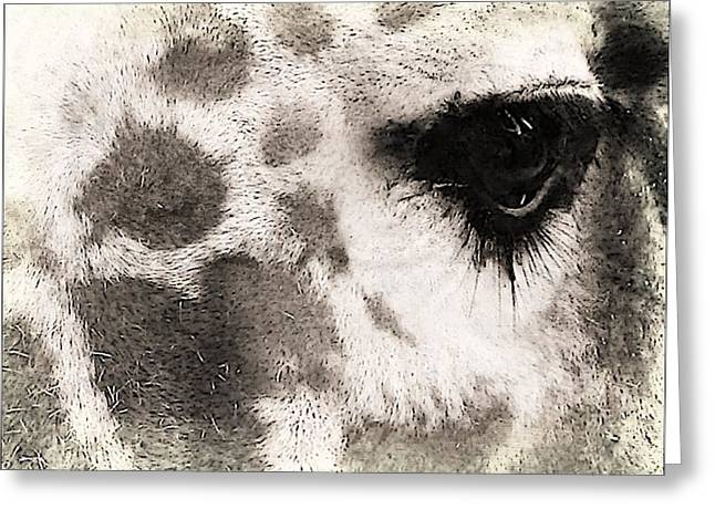 The Eyes Have It Greeting Card by Michelle Frizzell-Thompson
