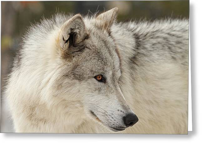 The Eyes Have It Greeting Card by Sandy Sisti