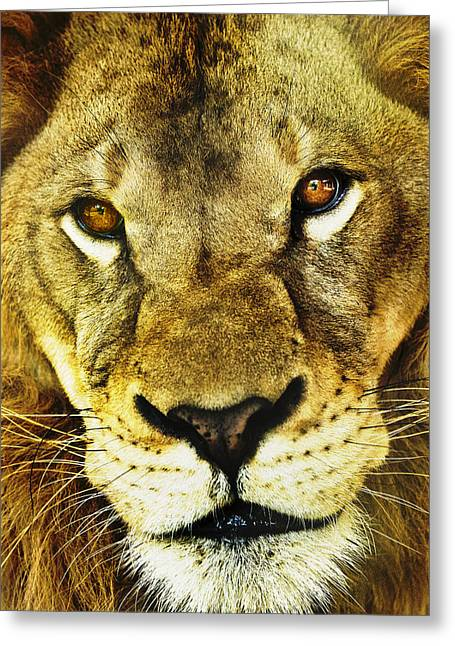 The Eyes Have It Greeting Card by Steve Smith