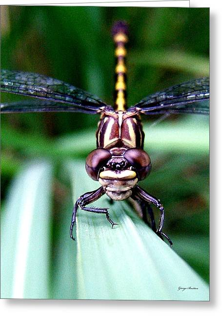 Greeting Card featuring the photograph The Face Of A Dragonfly 01 by George Bostian