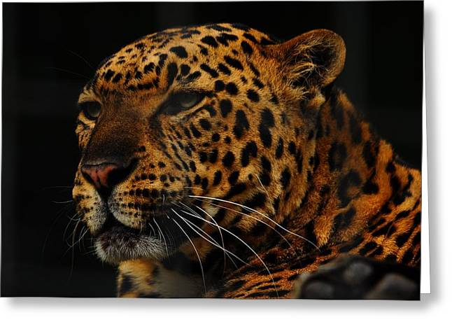 The Face Of A Leopard Greeting Card by Valarie Davis