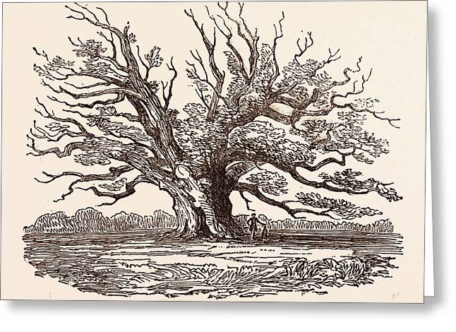 The Fairlop Oak, In Hainault Forest In The London Borough Greeting Card