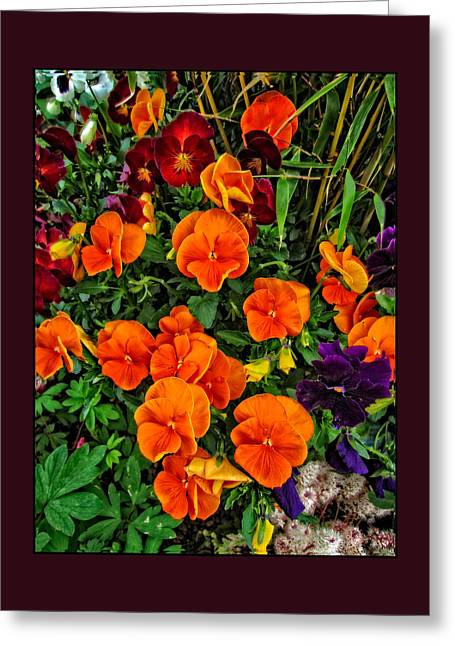 Fall Pansies Greeting Card